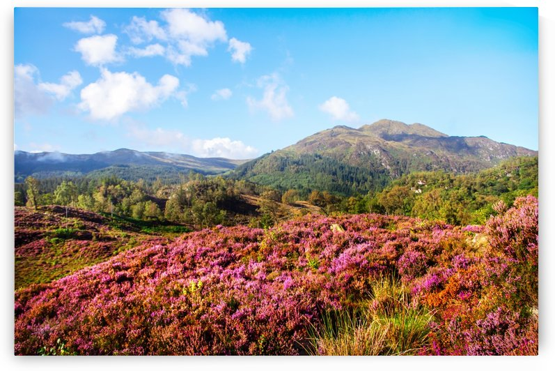 Vivid Glimpses Of Autumn In Trossachs by Jenny Rainbow