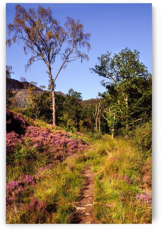 by the path to natures hugs jenny rainbow by Jenny Rainbow