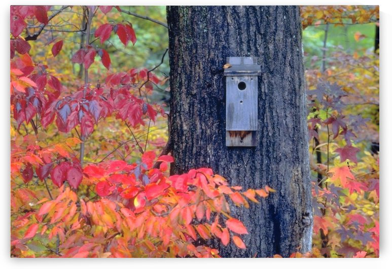 Bird House In Fall Photograph by Katherine Lindsey Photography