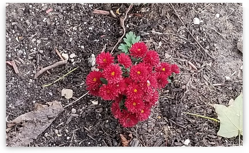 fall flower bunch by Wendy A Rohn