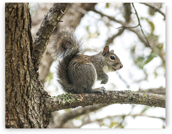 Squirrel on 19th St. by Ian Barr