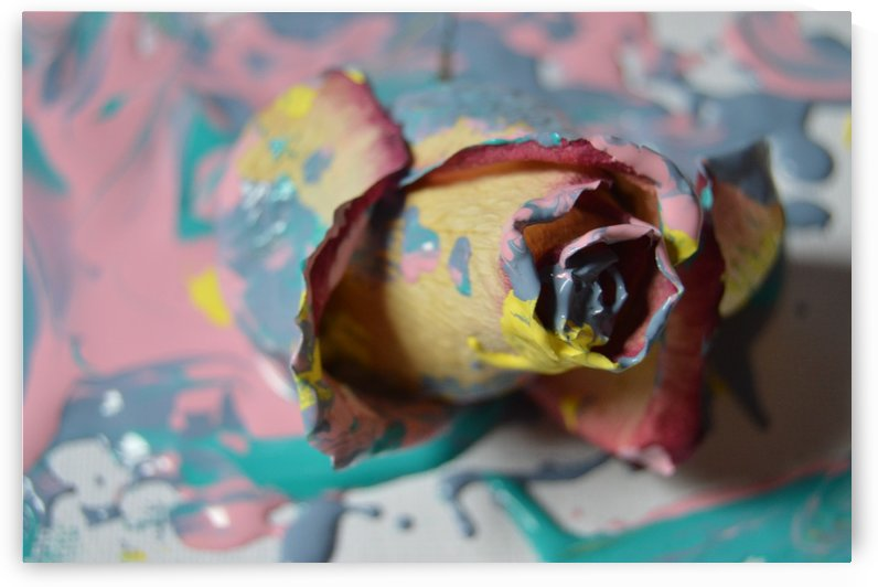 Painted Roses.03 by Alexis Patten