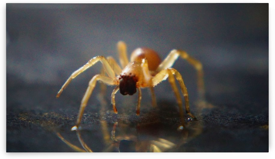 Best spider leg forward by Andy Jamieson