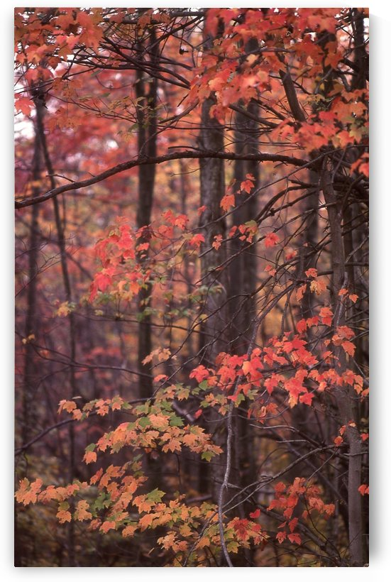 Virginia Fall Foliage Photograph by Katherine Lindsey Photography