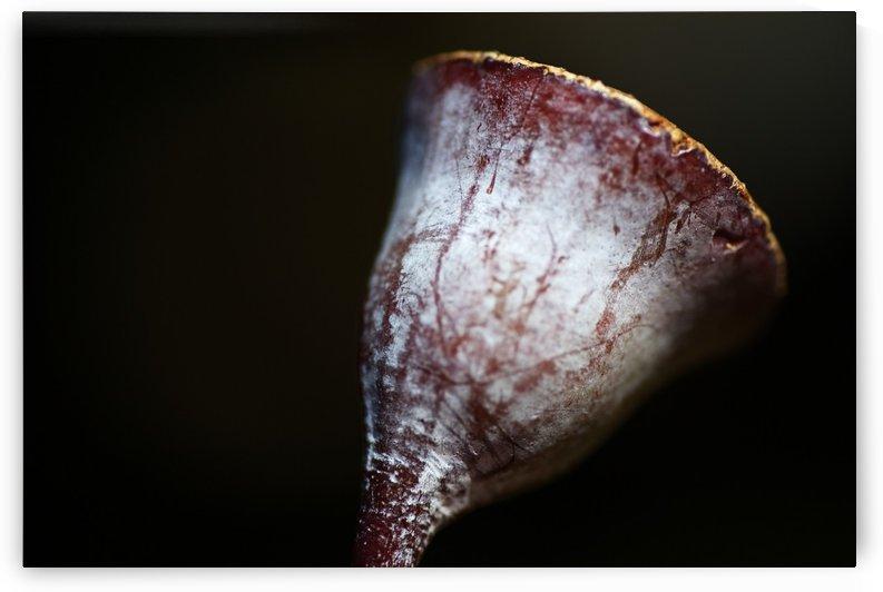 Eucalyptus Gumnut by Joy Watson