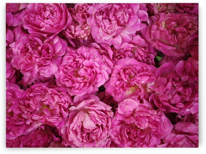 ROSE GARDEN   by rizu_designs