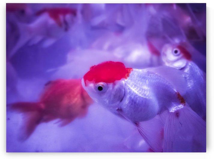 Golden Fish  by rizu_designs
