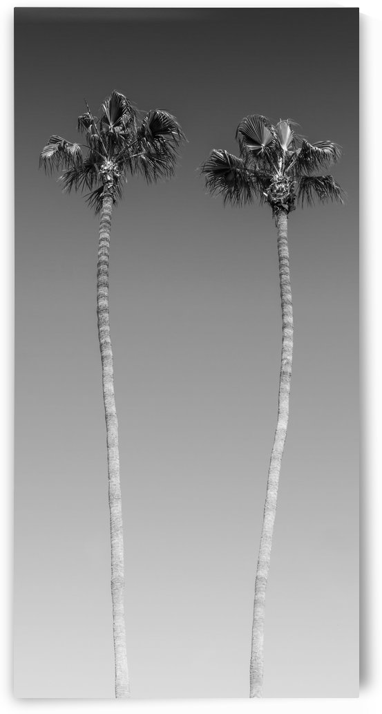Idyllic Palm trees | monochrome by Melanie Viola