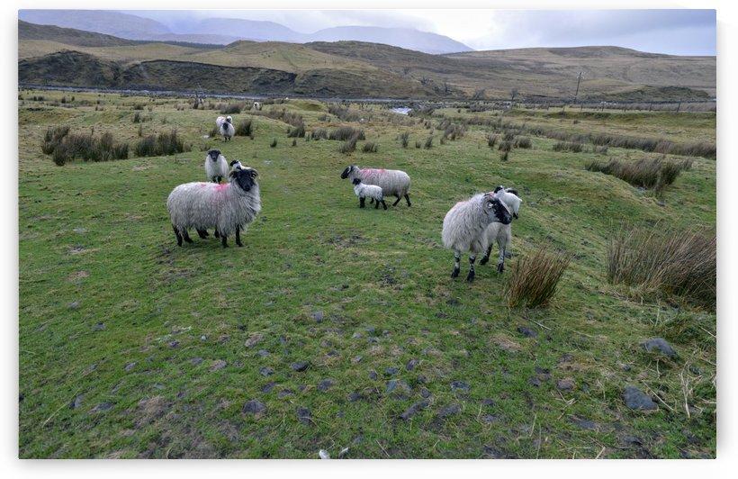 Turf on a bogland Ireland. by Gerald Cummins