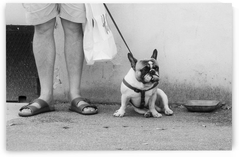 French bulldog  by Alen Gurovic