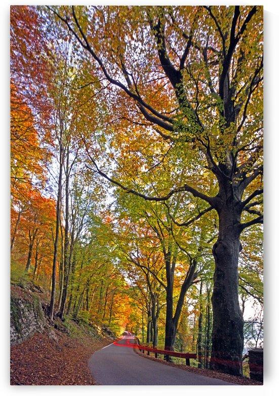 inside the autumn by Luigi Girola