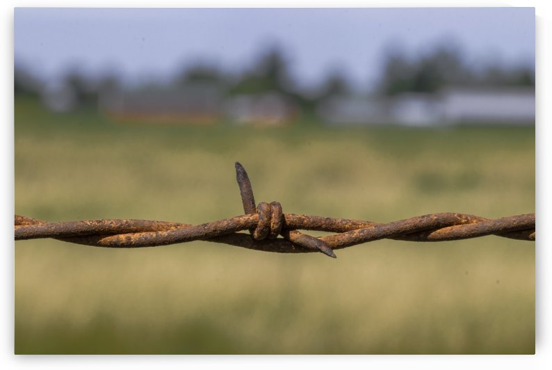 Rusty Barbed Wire by Joe Riederer