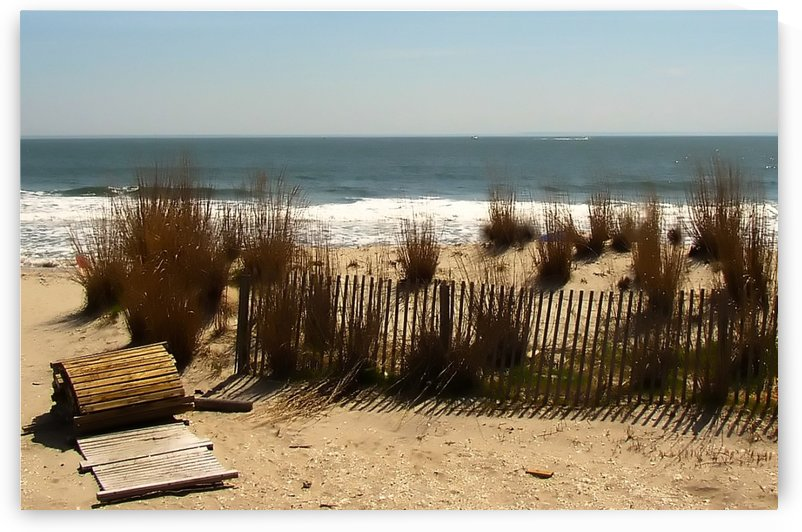 Coastal Atlantic Beach Dunes by Connie Maher