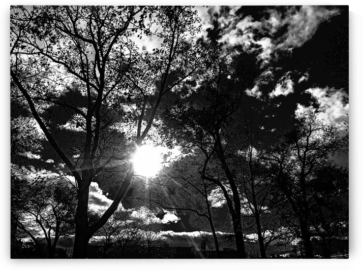_1150914_1572476990.2777 by Pietro Lucerni Photography