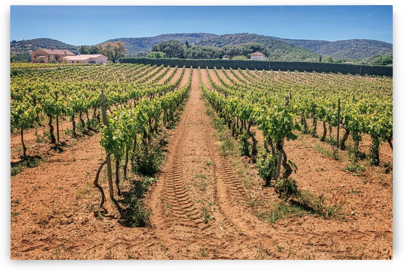 Vineyard. Provence France by PICS EMOTION by Tatiana RAVVA
