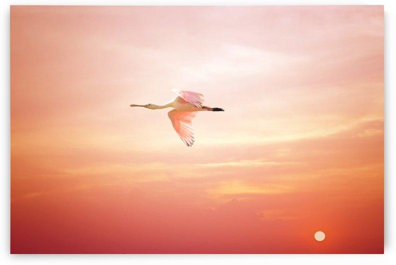 Rosette Sunset by Karen Janczak