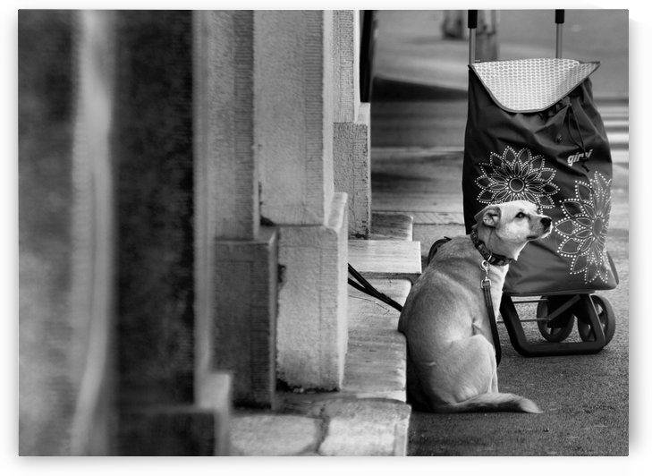 Dog Artist by Alen Gurovic