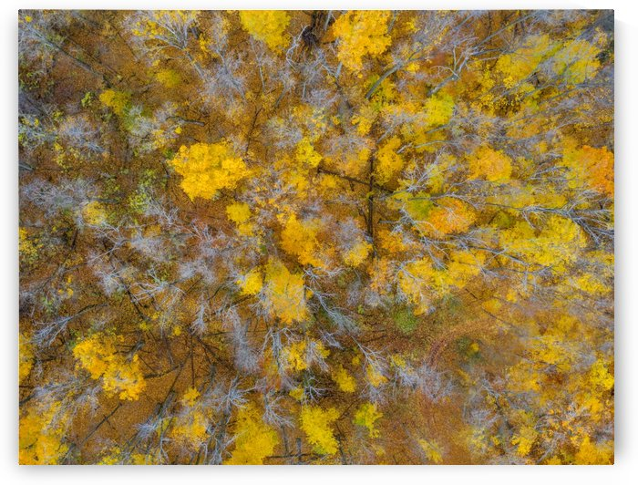 Colorful world by Marko Radovanovic
