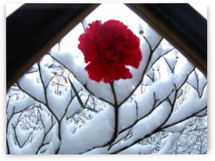 Reminiscing Red by Brett Noel