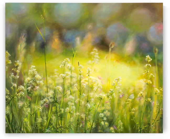 Midsummer beauty by Ineta Petersone