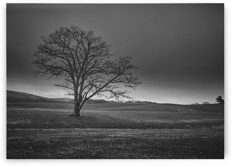 November Tree by Bob Orsillo
