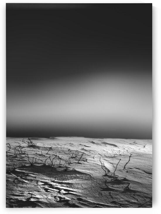 Silent Morning by Bob Orsillo