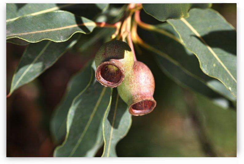 Gumnut Pair by Joy Watson