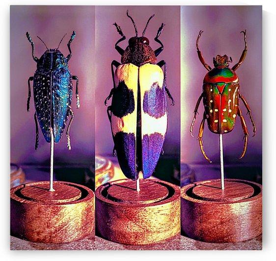 science bug by Bratty ART