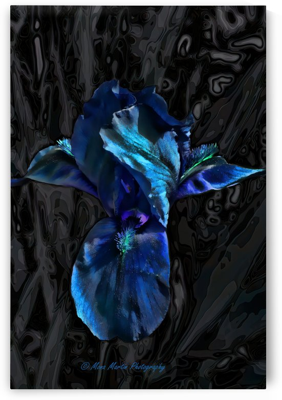 Bearded Blue by Mona Martin