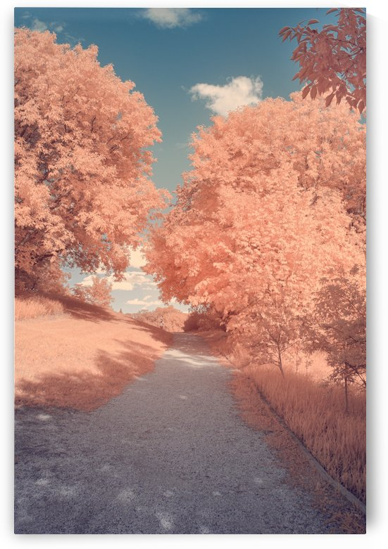 DSC_0558 Edit by Brent Mckean