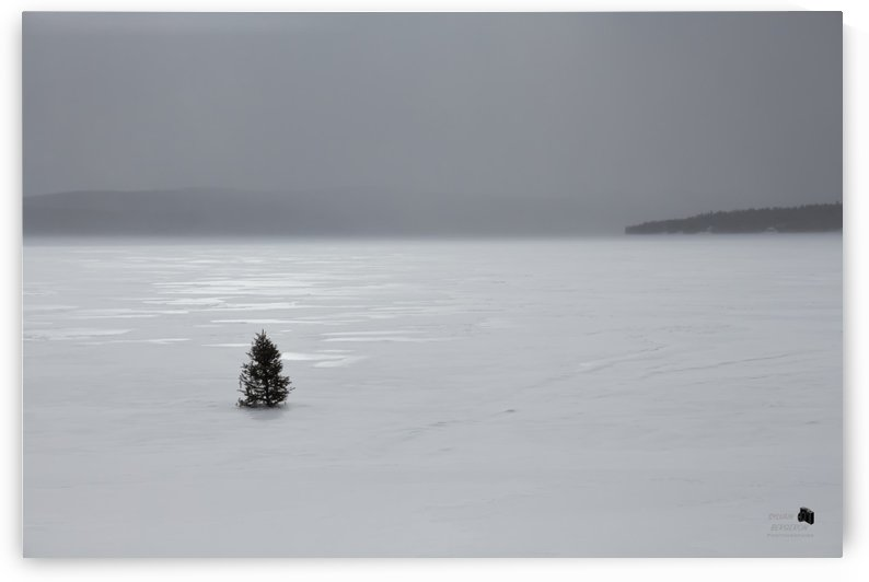 Alone by Sylvain Bergeron Photographies
