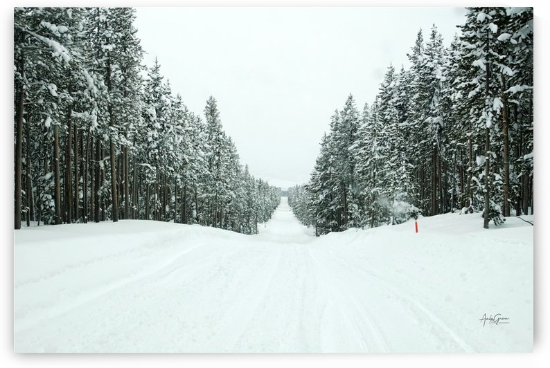 Long path to Shovel by Andy Griner