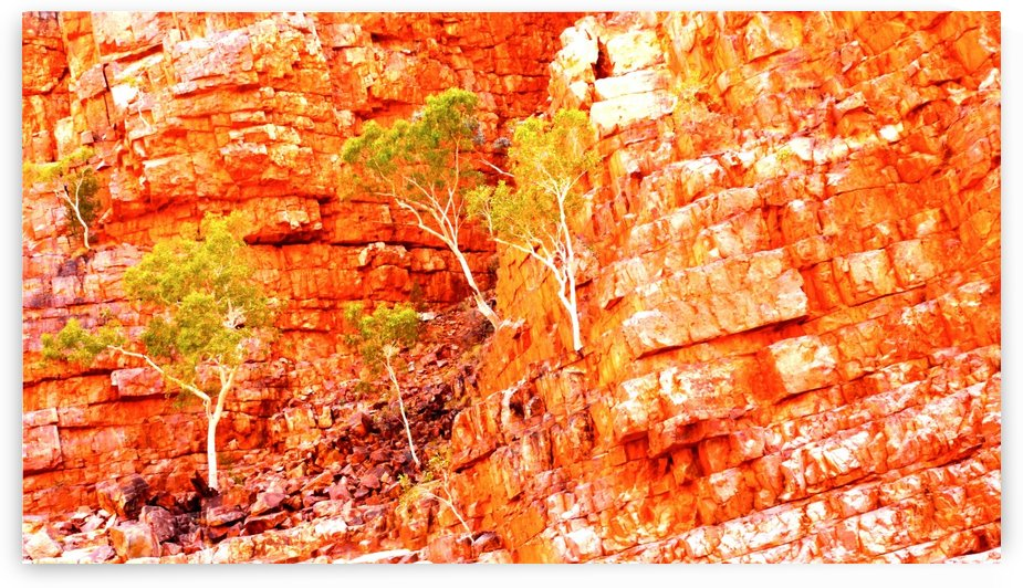 Growing in the Rocks - Ormiston Gorge by Lexa Harpell