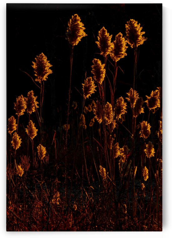 Prairie on Fire by Dave Therrien