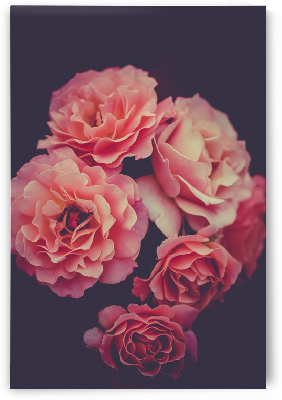 Roses by One Simple Gallery