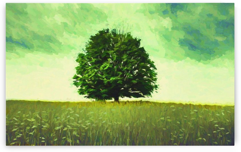 Lonely tree by Angel Estevez
