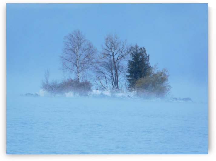 Frosty November Fog by Debbie Caughey