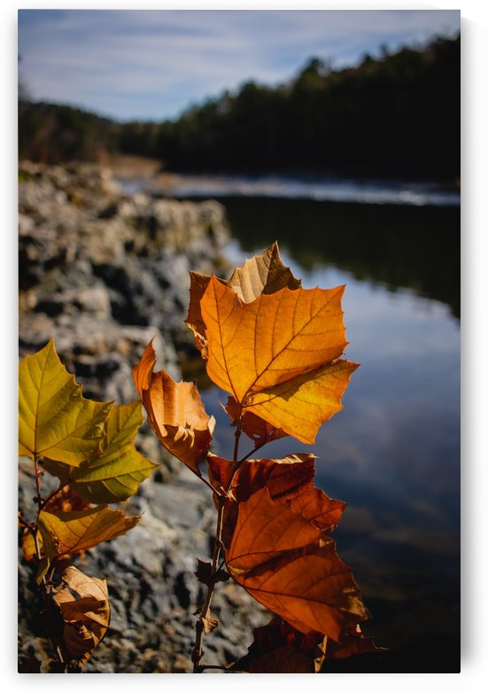 Autumn Leaves by CZB Photography