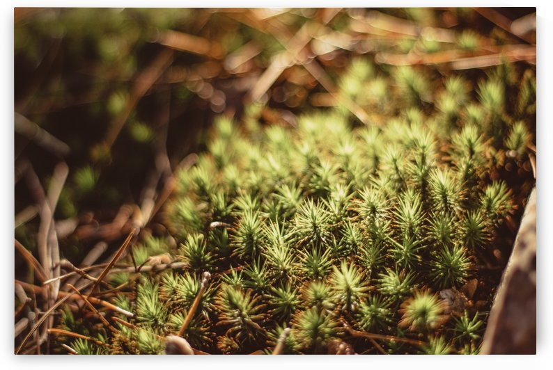 Prickly by CZB Photography