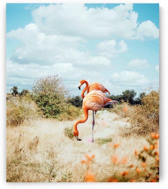 Flamingo Couple by 83 Oranges