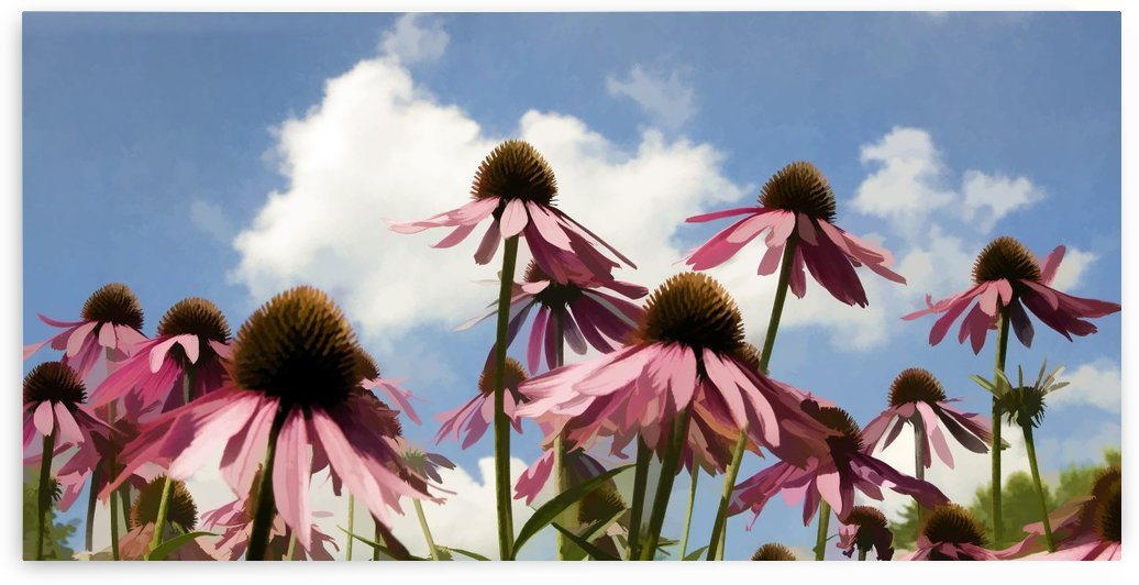 Coneflowers by Lee Fortier
