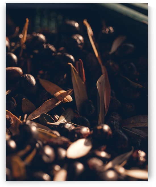 Olives Harvest by Luigi Veggetti