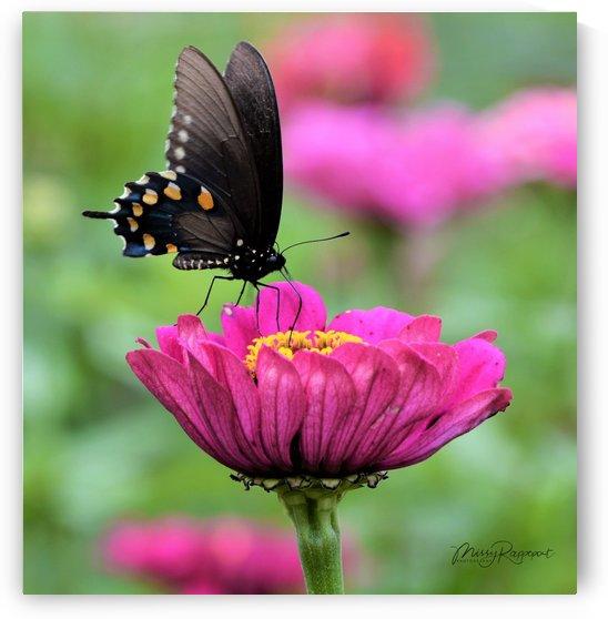 Butterfly On Pink Flower by Missy Rappoport