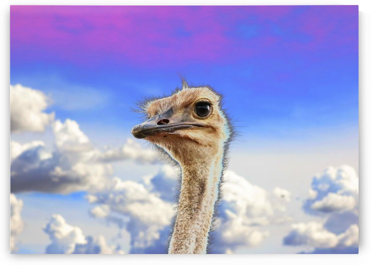 Ostrich Portrait 7664 thula art by Thula-Photography