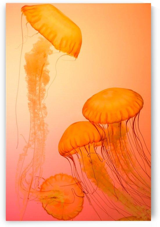 Orange  Jellyfish  Floating  Poratit by Smithson