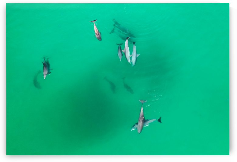 Dolphins 11-25 by Destin30A Drone