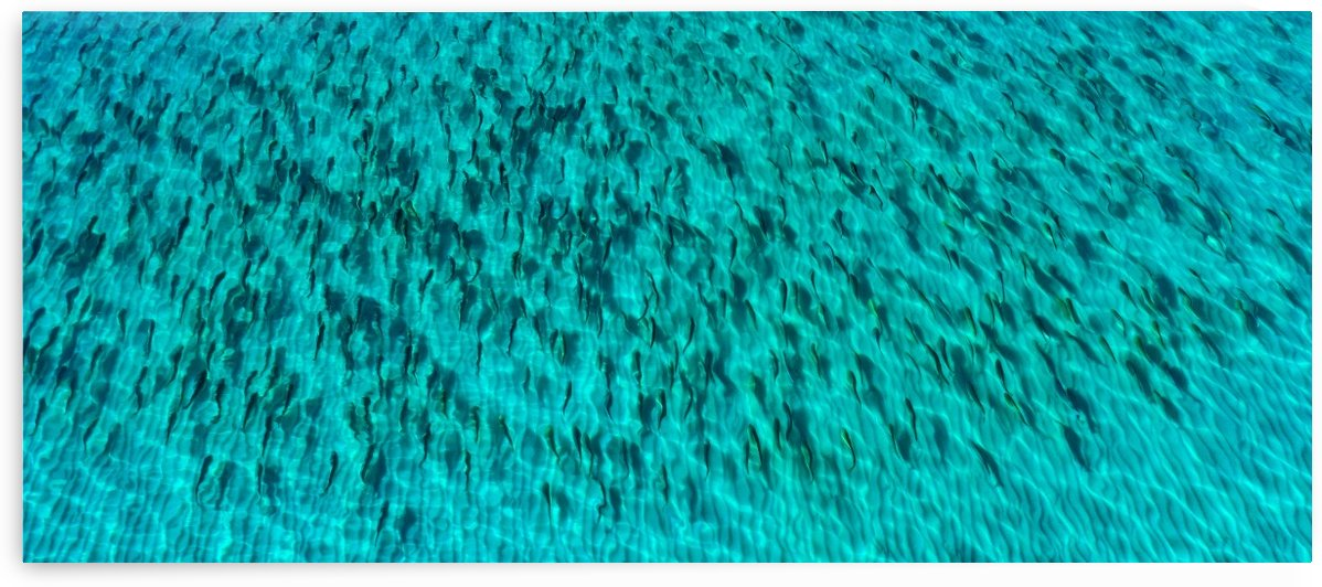 Redfish Pano by Destin30A Drone