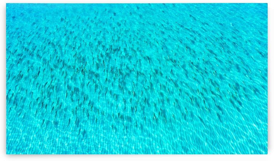 Redfish Crystal Beach  by Destin30A Drone