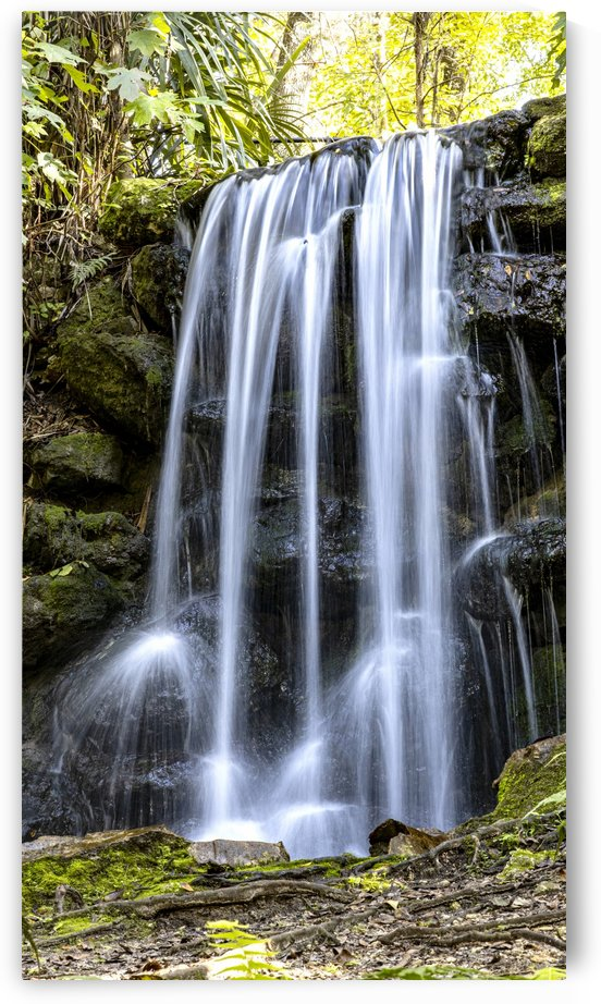 Rainbow Springs Falls by Connie Maher
