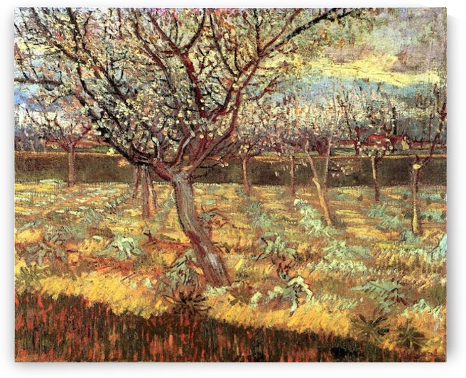 Apricot Trees in Blossom2 by Van Gogh by Van Gogh